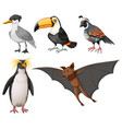 different types of wild birds vector image vector image