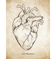 hand drawn anatomically correct human heart vector image vector image