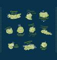 Natural organic food emblems