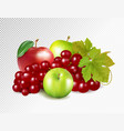 red grapes green apples red apple isolated on vector image