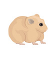 flat of domestic hamster home rodent with vector image vector image