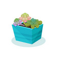 succulent indoor house plant in a pot element for vector image