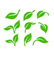 leaf nature green color sign ecology theme vector image vector image