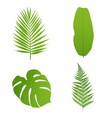 Set of tropical leaves Palmbananafernmonstera vector image vector image