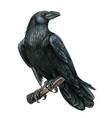 watercolor black realistic western raven vector image