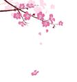 Cherry branch with flowers isolated on white vector image vector image