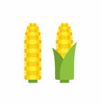 corn cobs vector image vector image