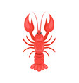 red crayfish isolated on white vector image