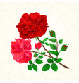 bouquet of red and pink roses and rosebuds vector image