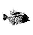 a skeleton of big fish vector image
