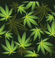 cannabis on the black background vector image