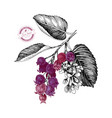hand drawn branch of shadberries vector image vector image