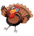 turkey on white background vector image vector image