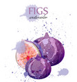 fig fruits watercolor delicious colorful vector image vector image