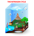 nitrogen cycle vector image vector image