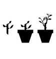 sprout planted in a pot vector image vector image