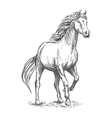 White horse with stomping hoof portrait vector image vector image