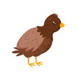 young brown chicken with orange beak and legs vector image vector image