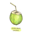 ink sketch young green coconut vector image
