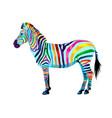 zebra from multicolored paints splash vector image
