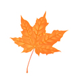 autumn maple foliage creative orange leaf vector image