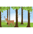 Forest landscape with deer vector image vector image