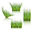 Fragments of the green grass isolated on white vector image