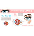 medical ophthalmology infographic daily lenses vector image vector image