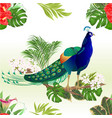 seamless texture exotic bird beauty peacock vector image