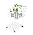 Four Evergreen Plants in A Shopping Cart vector image