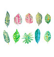 set watercolor leaves isolated on white vector image vector image