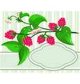 sprig raspberry vector image