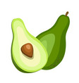 avocado icon cartoon singe fruit icon from the vector image