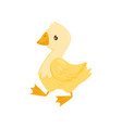 flat icon of cute young duck farm bird vector image