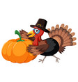turkey collect pumpkin on white background vector image vector image