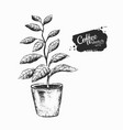 black and white coffee tree sprout vector image