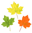 Color Autumn Leaves vector image