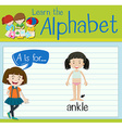 Flashcard letter A is for ankle vector image