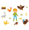 flat set of farm birds chicken nest and vector image