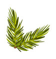 lively green spruce twig vector image vector image
