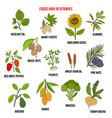 natural herbs as source vitamin e nuts vegetables vector image vector image