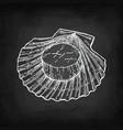 chalk sketch of scallop vector image