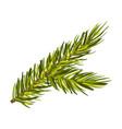 elegant green spruce twig vector image vector image