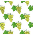 white grapes seamless pattern hand drawn sketch vector image