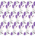 Lavender pattern with flowers in watercolor paint vector image