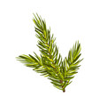 part green spruce with three twigs up vector image vector image