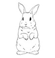 rabbit sketch hand drawn vector image vector image