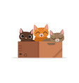 three funny cats of diffferent colors in a box vector image