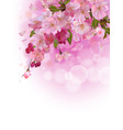 vertical background with sakura tree vector image