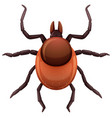 a mite tick on white background vector image